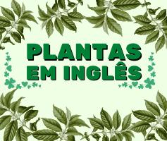 Tudo sobre Plantas em Inglês