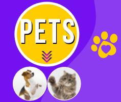 Pets: animais de estimação em inglês | animais domésticos em inglês